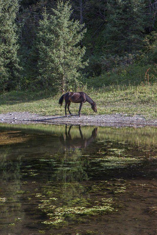 На берегу горного озера.photo preview