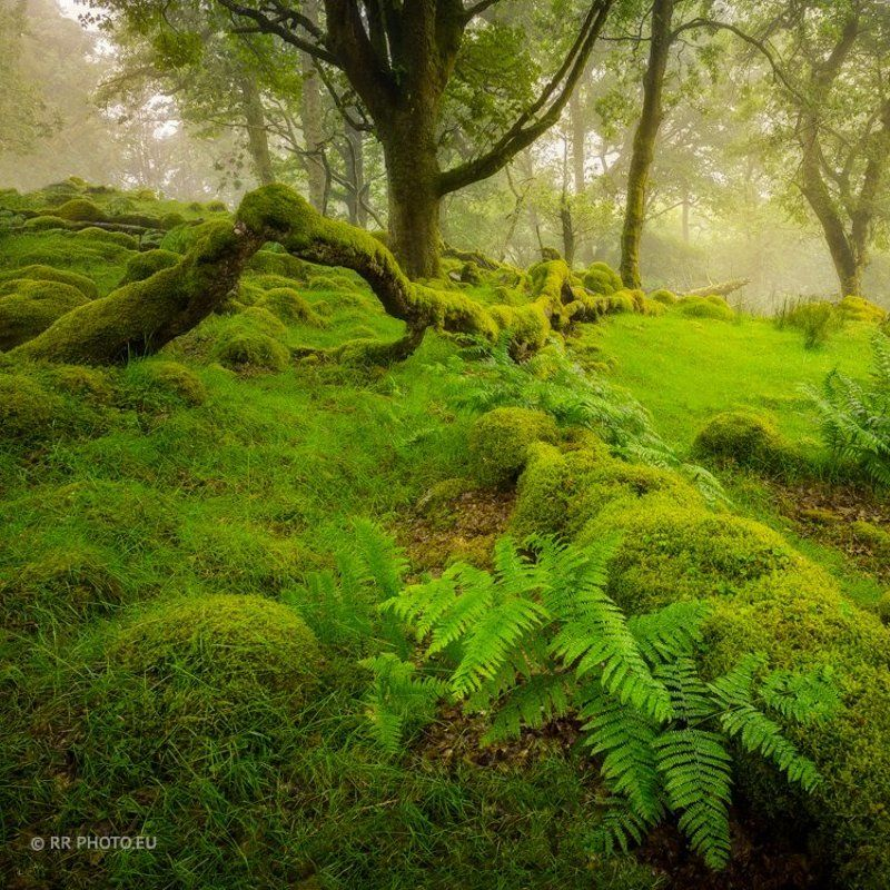 ireland, landscape, forest, wicklow, green,  Magic Forestphoto preview