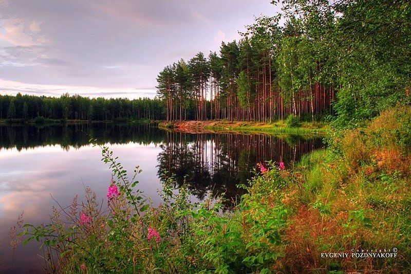 hdr, вода, деревья, евгений поздняков, красота, лес, лето, небо, облака, озеро, отражение, отражения, пейзаж, природа, рассвет, ручей, утро Рассветphoto preview