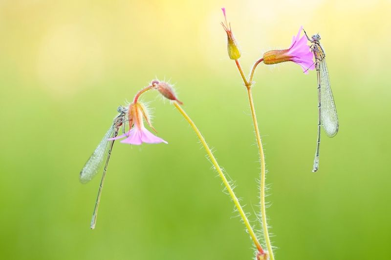 dragonfly  Symphony of life ...Symfonia życiaphoto preview