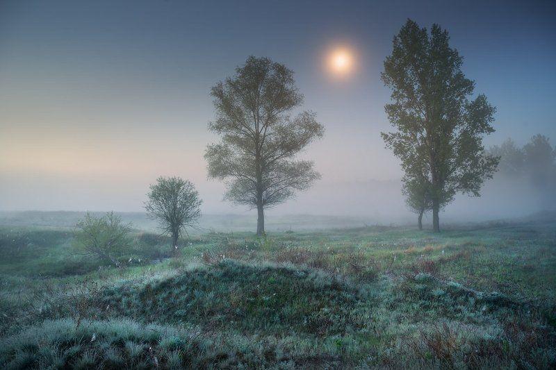 ночь, утро, луна, луг, Солоницевка, туман, сумерки Лунные Сумеркиphoto preview