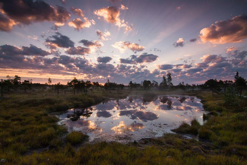Верховое болото, рассвет на болоте, Латвия Утро на болоте photo preview