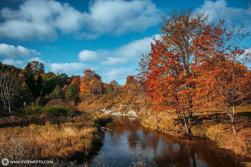 пейзаж,природа,осень,день,золотая,ноябрь,октябрь,солнце,landscape,autumn,nature,sky,day,gold Тёплое Осеннееphoto preview