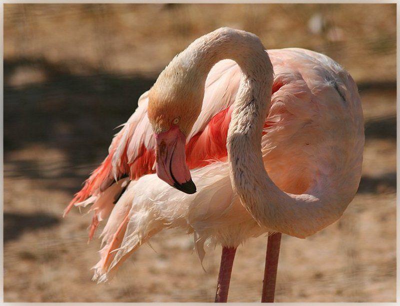 фламинго hdd Из прошлого..photo preview