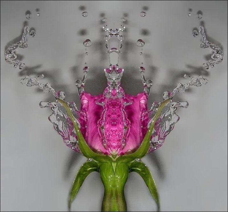 роза, вода, симметрия *photo preview