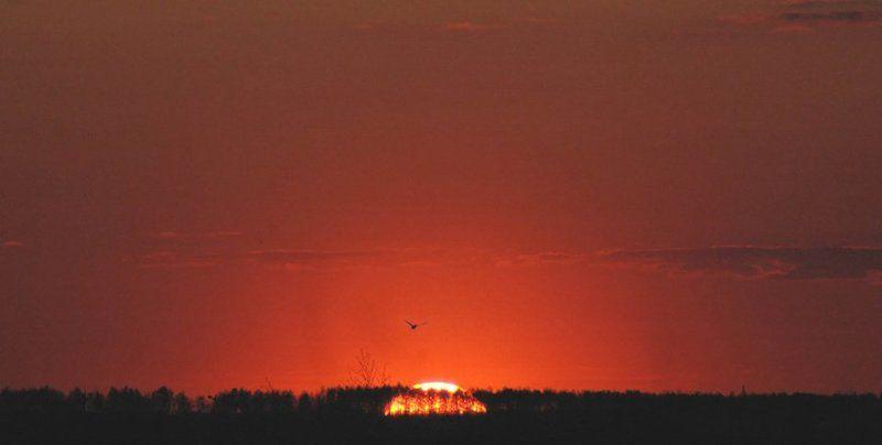 закат, май, курск Солнце скрылось...photo preview