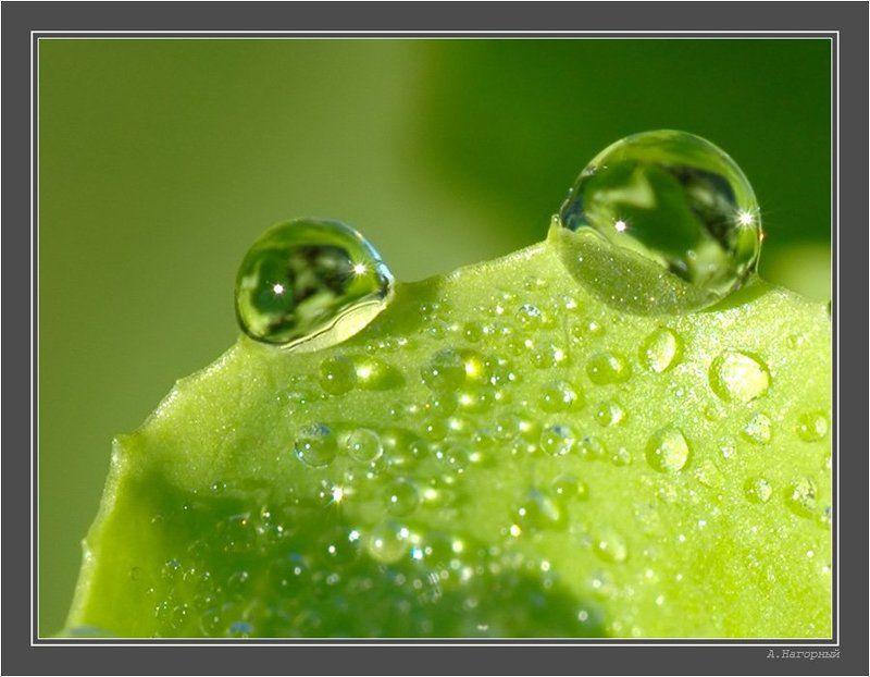 макро, лягушонок, утро, салат, роса, чудо, красота, природа Лягушонокphoto preview