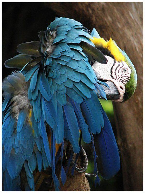 попугай, яркие краски, лето, жара, зоопарк К свиданию почти готов!photo preview