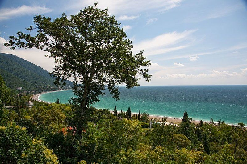 пейзаж, летний  пейзаж, горы, кавказ, абхазия, море, природа Летний день в Гаграхphoto preview