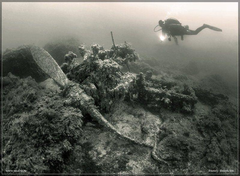 черное, море, херсонес, истребитель, самолет, рэк, anatoly, beloshchin, подводное, фото «Мир вашему дому!» (Истребитель. Подводное фото)photo preview