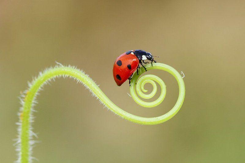 macro ladybugphoto preview
