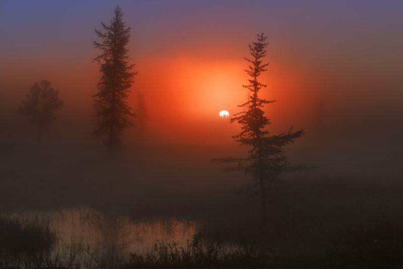 рассвет, туман, ямал, янао, уренгой,  новыйуренгой, \