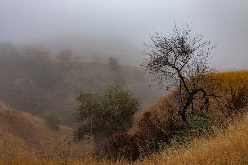 Осенний туманphoto preview