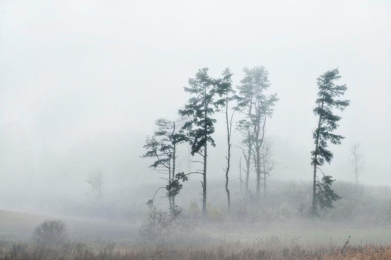 Mолчать в тумане ...photo preview