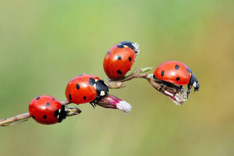 ladybug animals red canon macro autumn today ladybugsphoto preview
