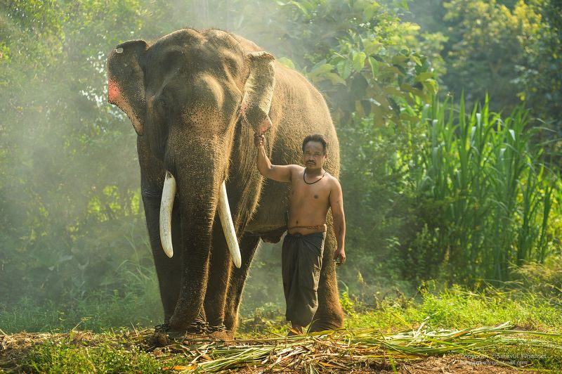 Animals, Asia, Asian, Culture, Elephant, Green, Journey, People, Photo, Photography, Thai, Thailand, Tour, Touring, Travel Thai elephantphoto preview