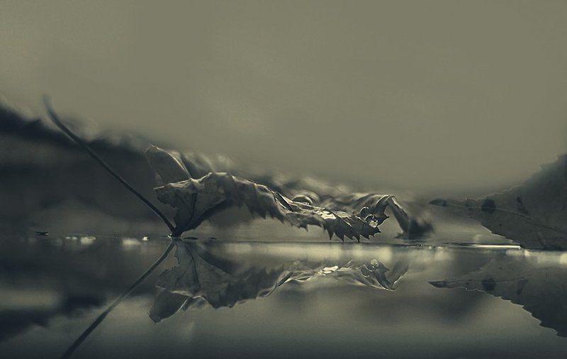 drops, leaf, reflection, autumnphoto preview