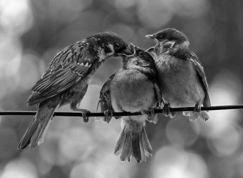 птицы, воробьи, животные В порядке очередиphoto preview