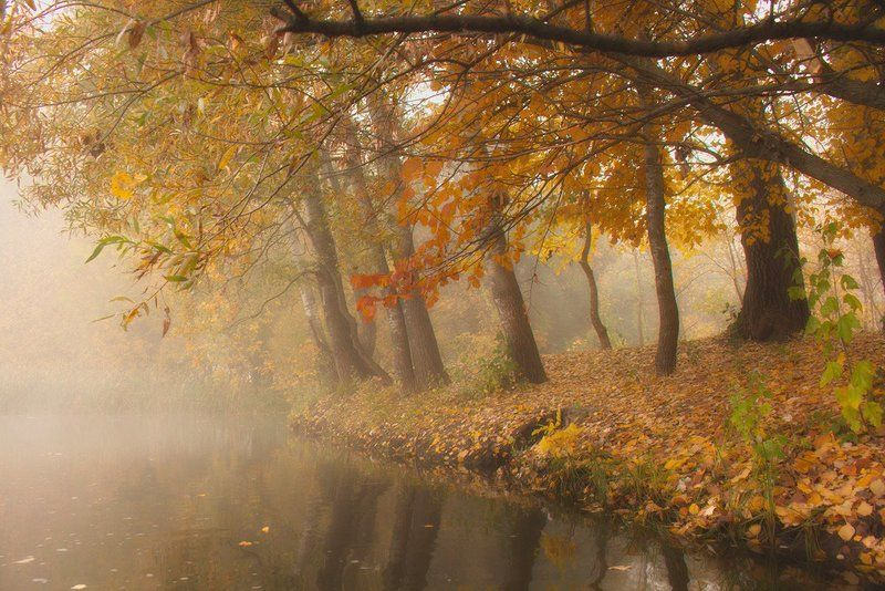 Река.Осень. Деревья. Осенние краски.photo preview