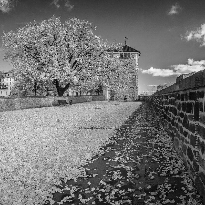 ик, германия, magdeburg, осень, зарисовка, город, ir, река Магдебург, осенние ИК зарисовки...photo preview