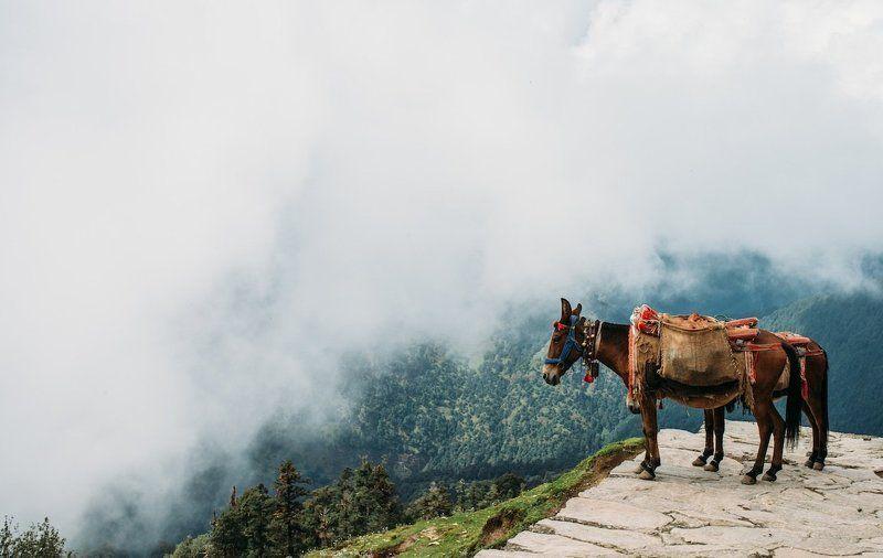 Лошадки в облаках (Тунгнатх, Гималаи)photo preview