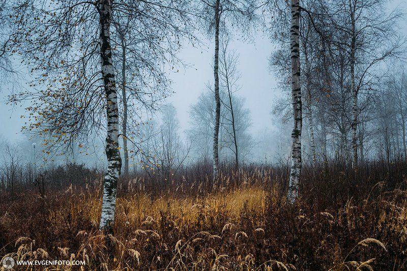туман,пейзаж,природа,осень Утренний туман Ноябряphoto preview