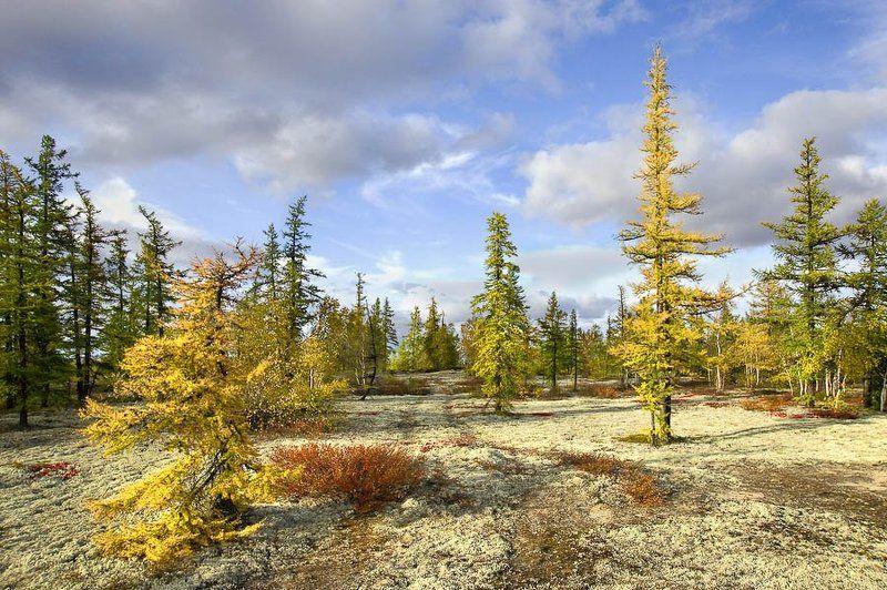 тундра, осень, Ямальская тундраphoto preview