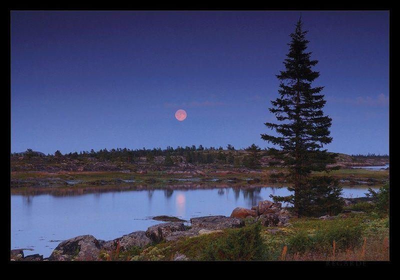 белое море, луна, карелия, закат, вечер, тишина pleine lunephoto preview