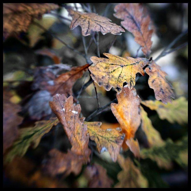 лес, осень, дубовые листья, lensbaby Закрытие сезонаphoto preview