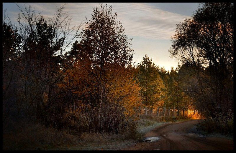 утро, осень, лес, дорога Первые лучиphoto preview