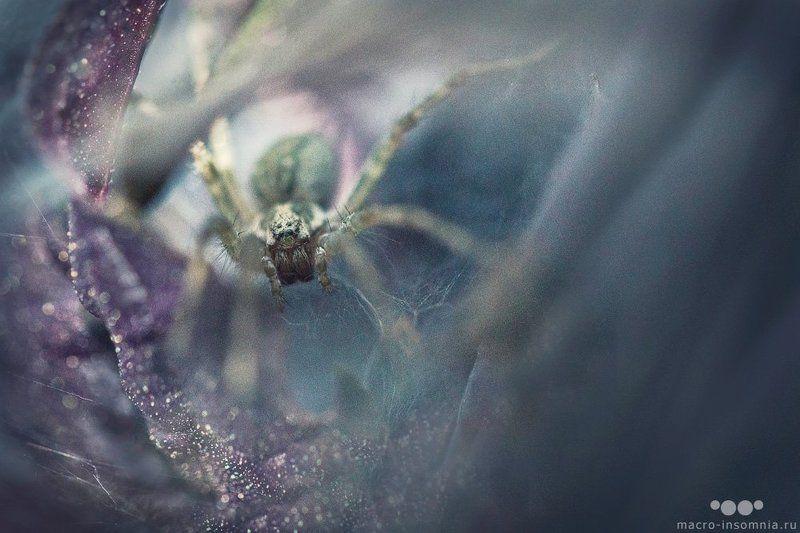 логово, макро, паук, воронковый паук, травяной паук, луговой паук, насекомые, кривошеев кирилл, дикий макромир, macro-insomnia, spider, insect, web, убежище Логовоphoto preview