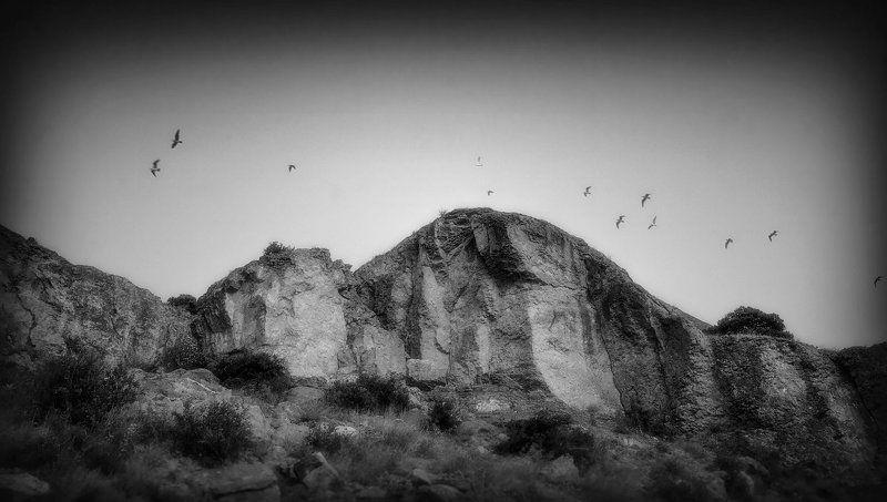 чайки, горы, вечер, черное, белое Пролетают...photo preview