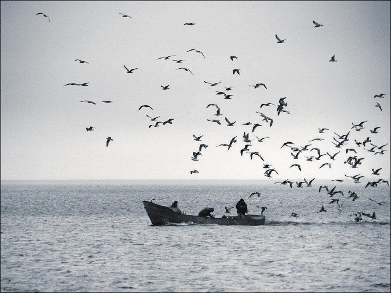 рыбаки, чайки идём домойphoto preview