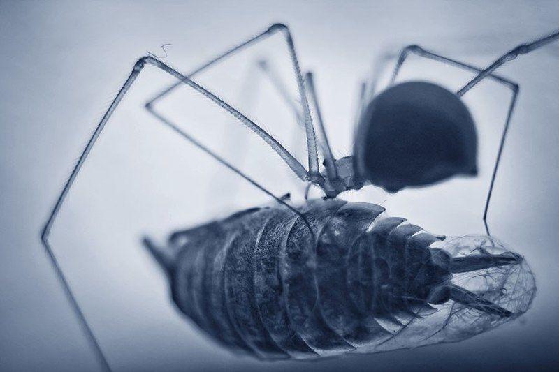 паук, мокрица, макро Завтракphoto preview