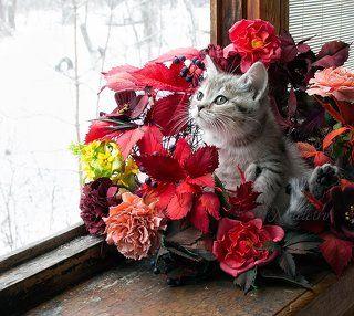Осени прощальные дары...