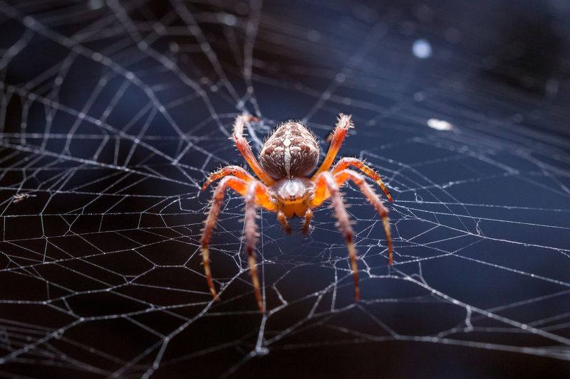 spider, web, night, light spiderphoto preview
