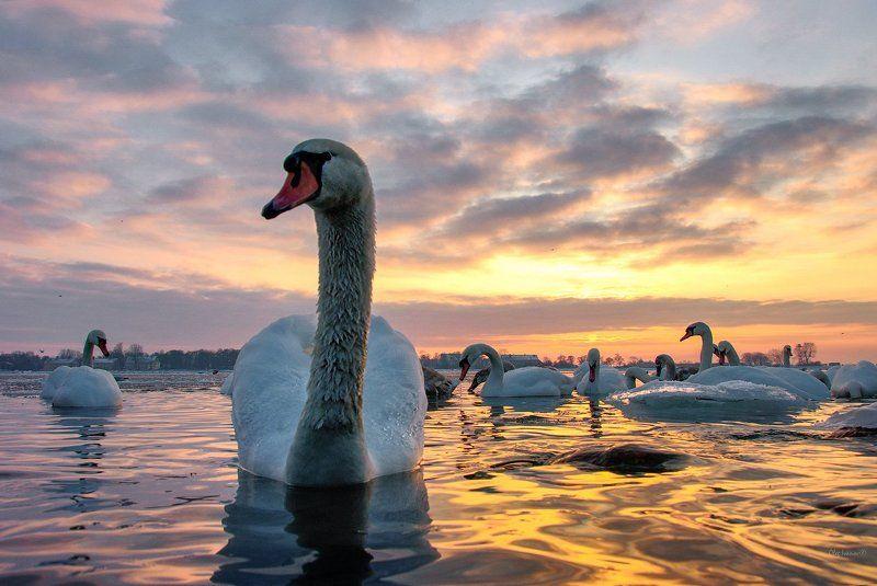 Балтика, Закат Вечер, Калининградский морской канал, Лебеди Балтийск Холодный вечер в теплых краскахphoto preview