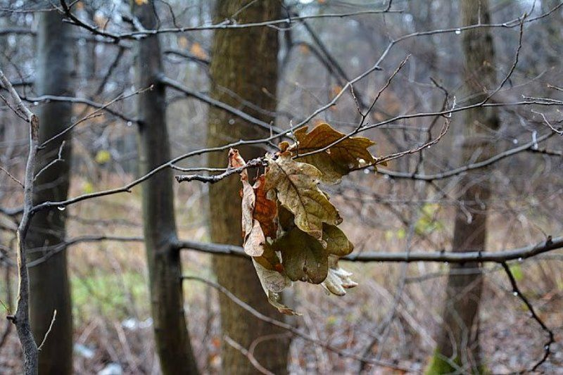 белка, красота, лес, природа, туман Когда рассеялся туман...photo preview