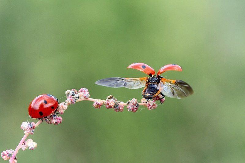 ladybug animal nature farewellphoto preview