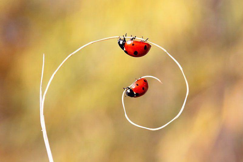 ladub nature animals canon ladybirdsphoto preview