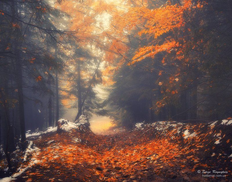 Autumn, Carpathians, Fall, Forest, Leaves, Золотая осень, Карпаты, Лес, Осень Magic Forestphoto preview