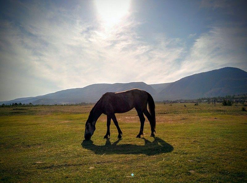 Ганеев Тимур, USA