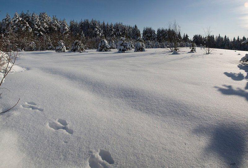 зимняя, сказка О зайцах...photo preview