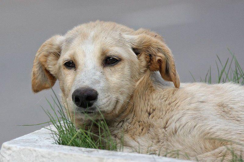 собака, улыбка, грусть, клумба, бездомный Улыбка с грустными глазамиphoto preview