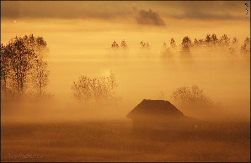 дом, рассвет, туман, утро, Дома и деревья играли в прятки...photo preview