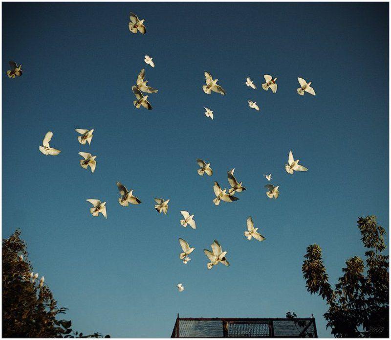 голуби, клетка, небо Фри?photo preview