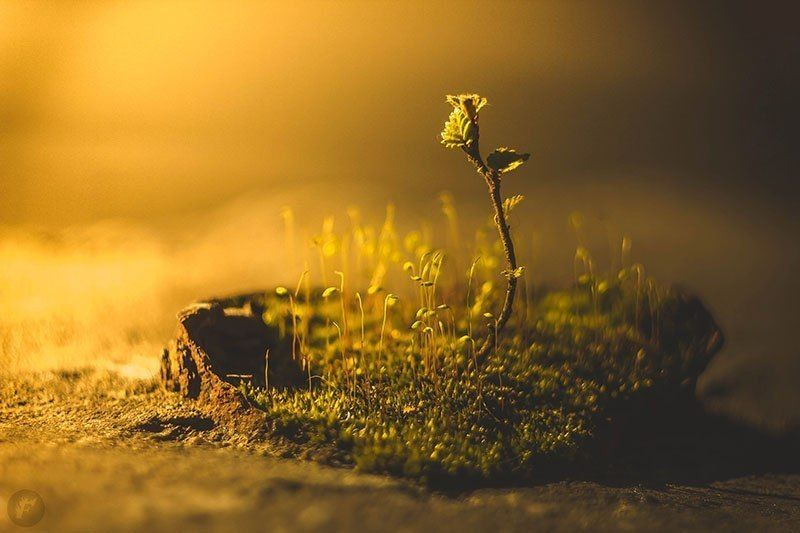 мох, росток, береза Островокphoto preview