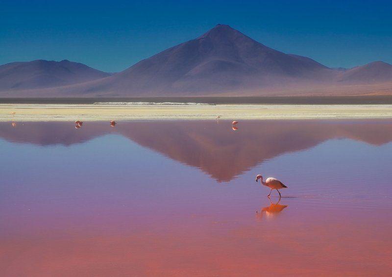 bolivia, боливия, mc о романтической нелюбви к розовому цвету..photo preview