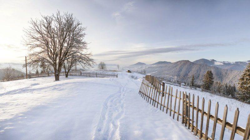 карпаты, горы, зима, снег, пейзаж, природа, панорама, дерево, вечер, украина * * *photo preview