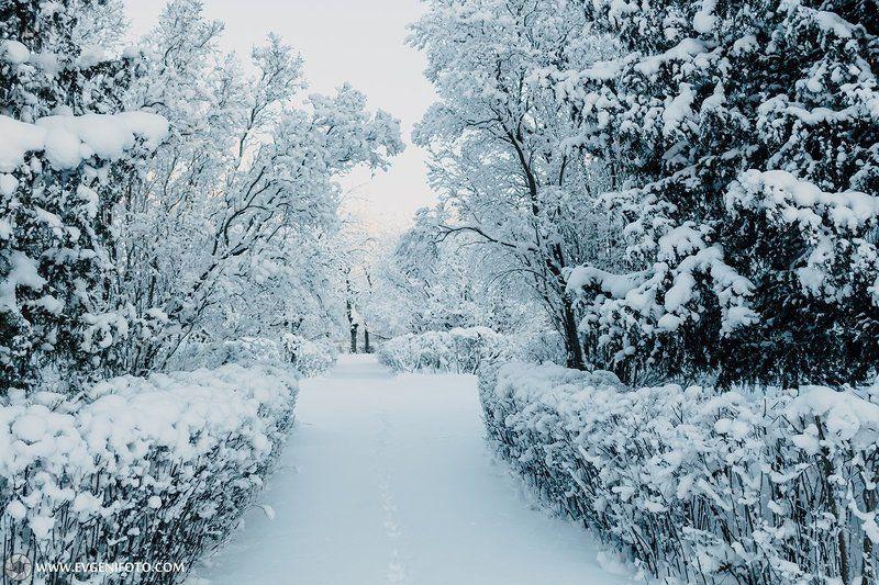 пейзаж,зима,природа,мороз,снег Морозноеphoto preview